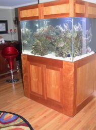 faq cube reef