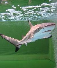 film_shark200